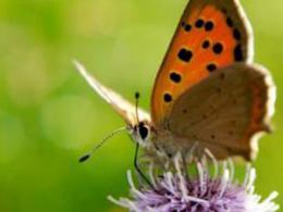 Butterfly 300x255